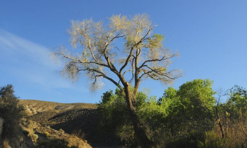 In Grapevine Canyon (From the Car)