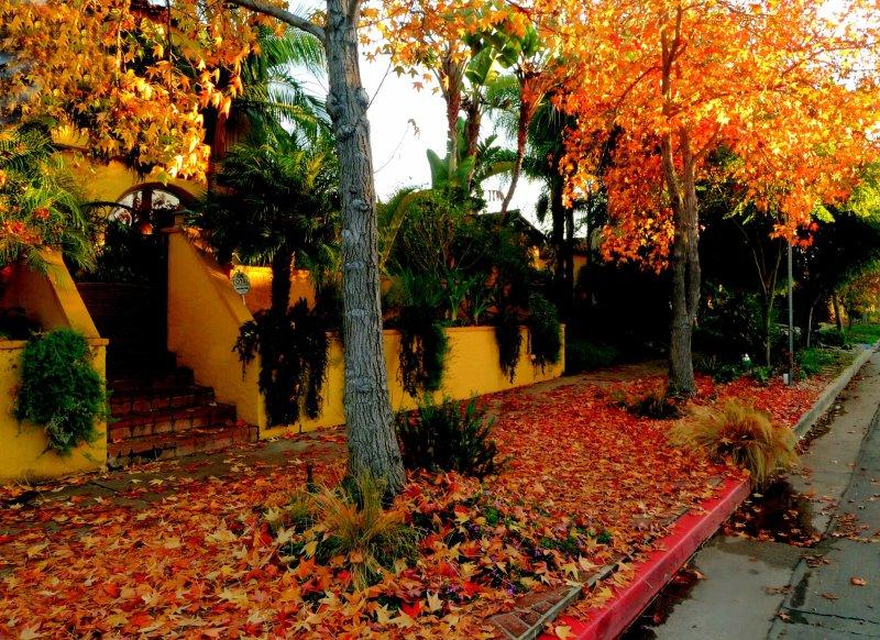 Autumn in Los Angeles