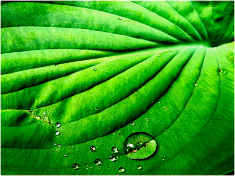 Leaf and Water Drop, at the historic Flavel House, Astoria, Oregon