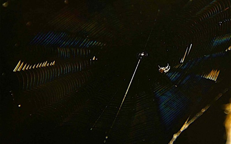 A Spider, its Web and Diffraction