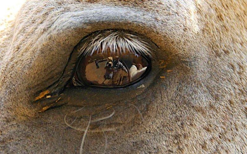 Reflection In An Eye
