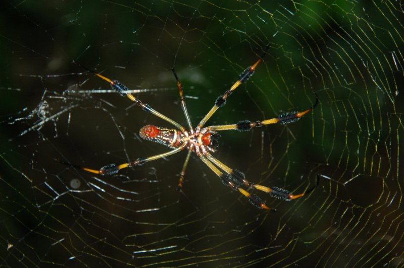 Giant Spider Alert!