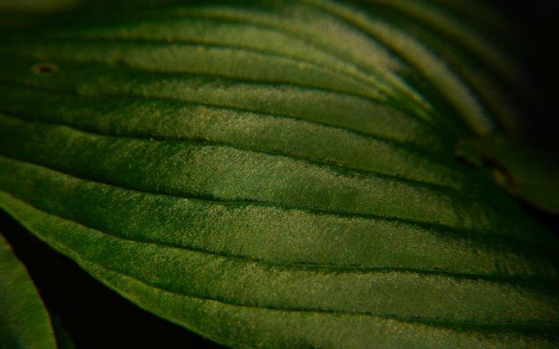 Leaf Detail, Brookgreen Gardens