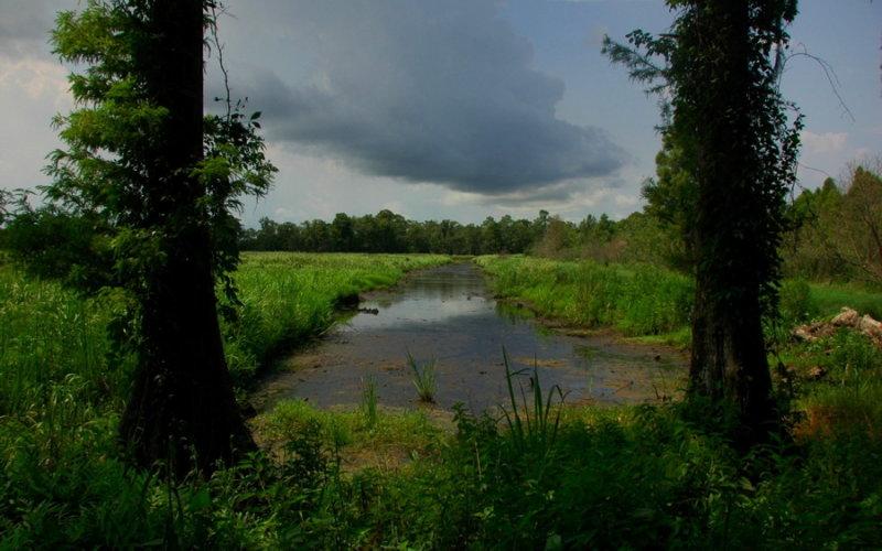 Plantation Rice Fields, Brookgreen Gardens