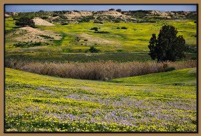 Spring 2011 - Nachal Bsor