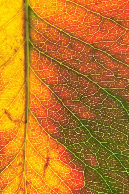 leaf macro 1