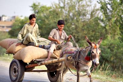 Children and donkey