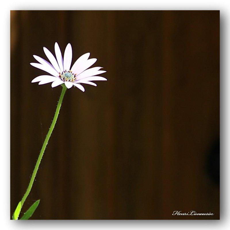 HL_F_MG_4998 une fleur