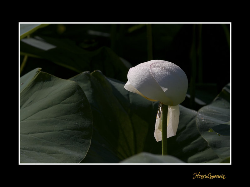 _MG_2753 nature fleur.jpg