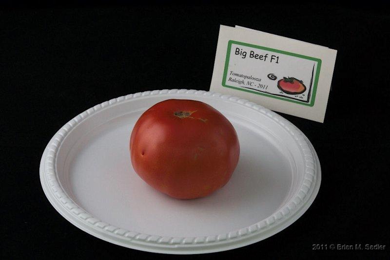 Big Beef F1_hf.jpg