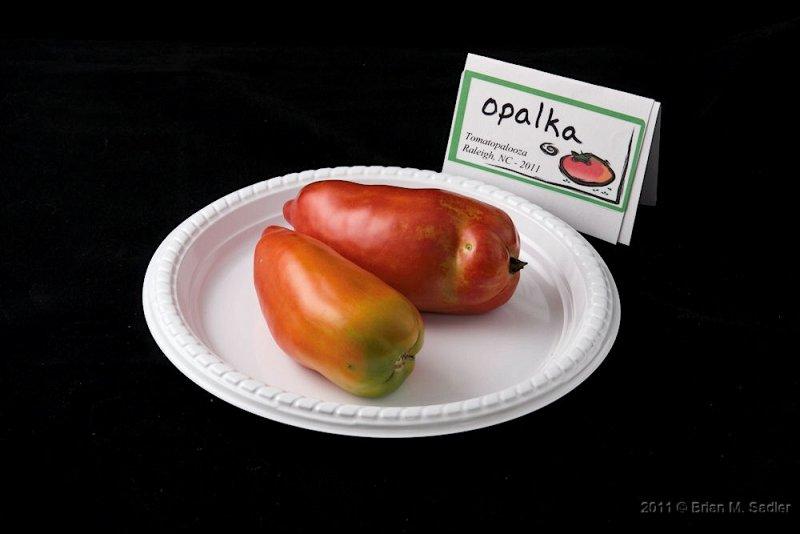 Opalka_hf.jpg