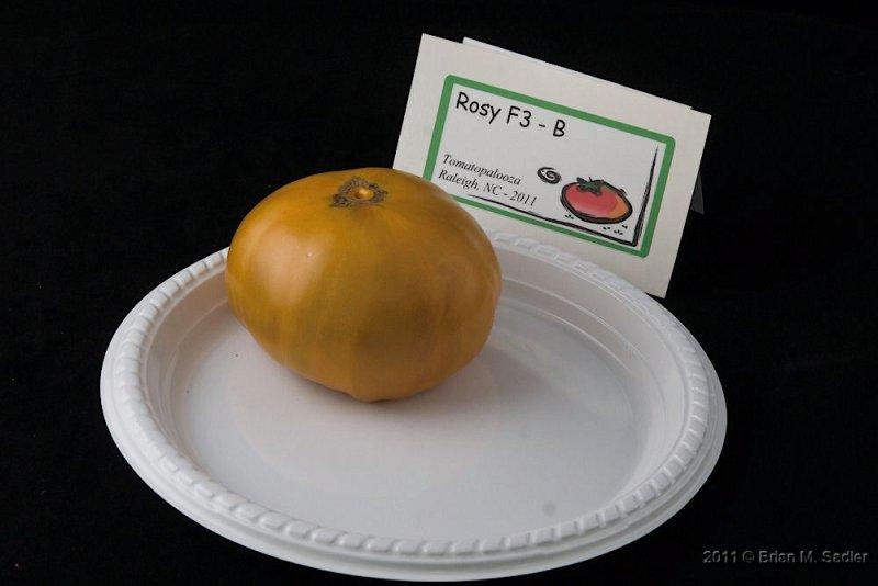 Rosy F3 - B_hf.jpg