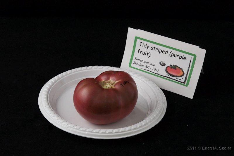 Tidy Striped (purple fruit)_hf.jpg