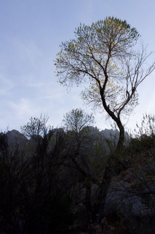 Aguirre Springs area on east side of Organ Mountains
