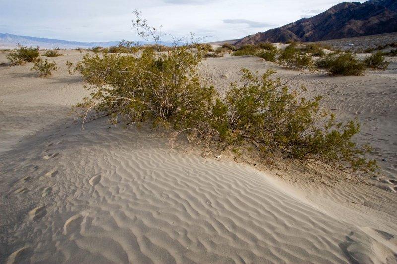 Death Valley dunes #1