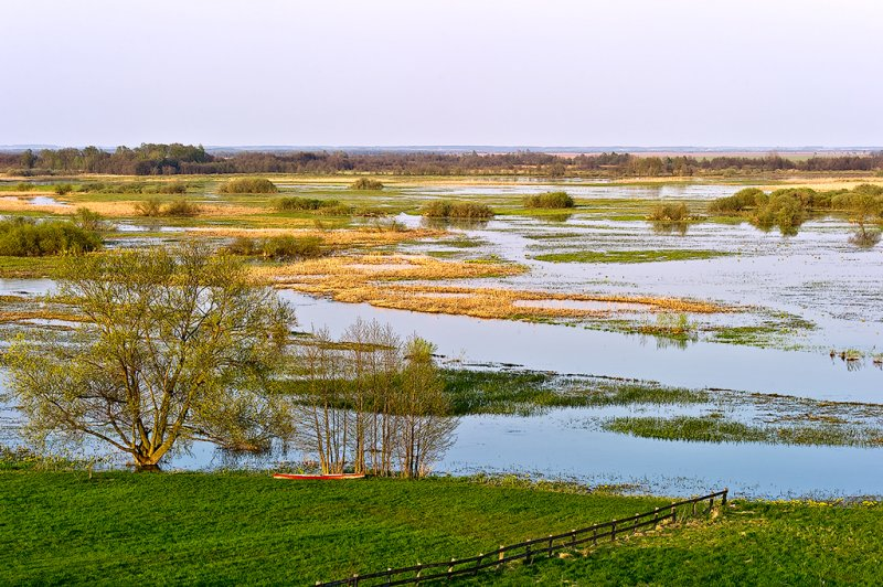 The Backwater of Biebrza River