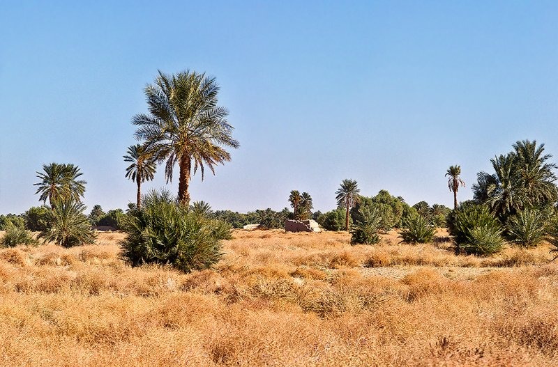 Tafilalt Oasis