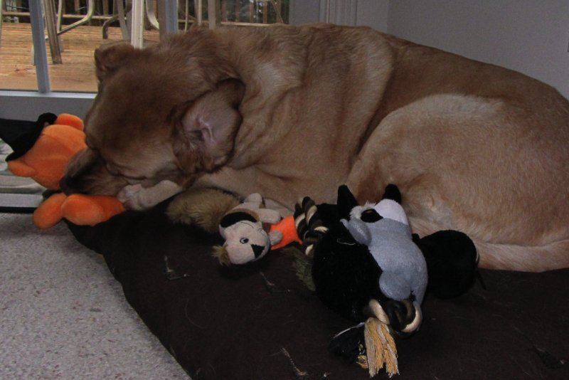Glinda with Toys<BR>October 27, 2011