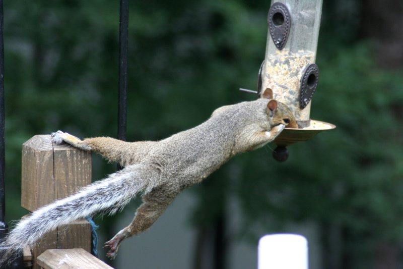 July 28, 2006<BR>Squirrel