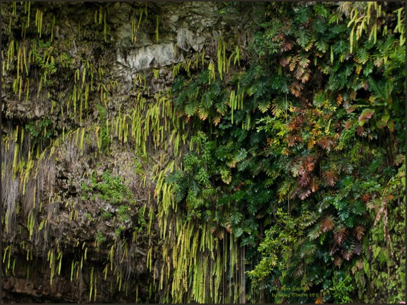9467.More Fern Grotto