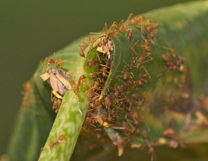 Ants  438.jpg