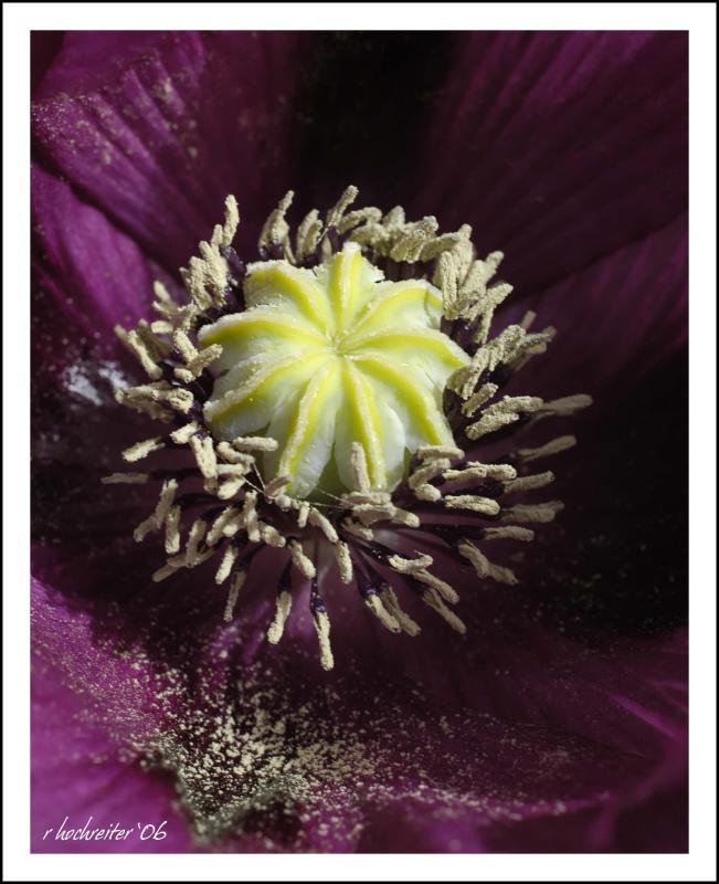 Poppy 12.jpg
