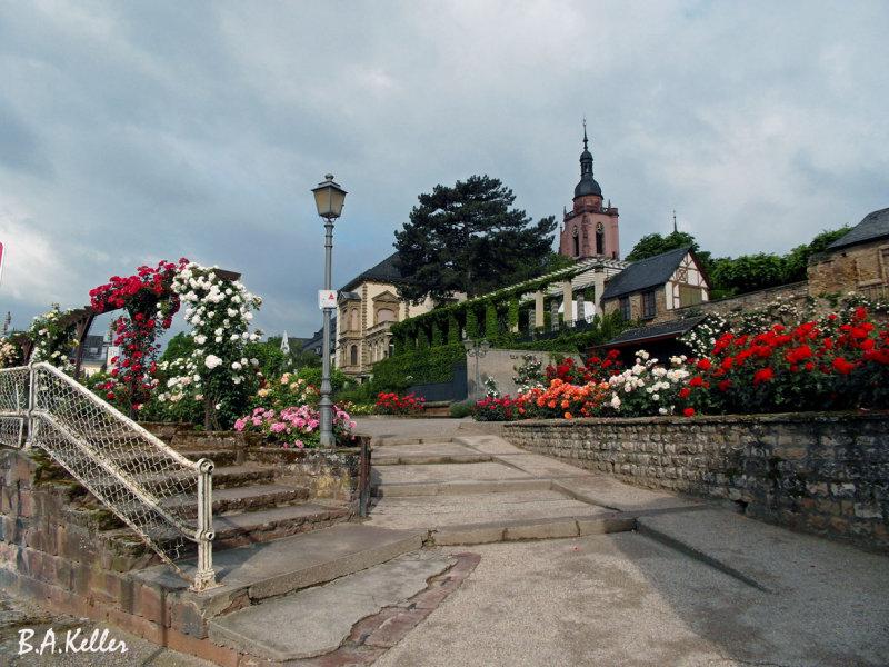 Eltville am Rheinufer und Kirche