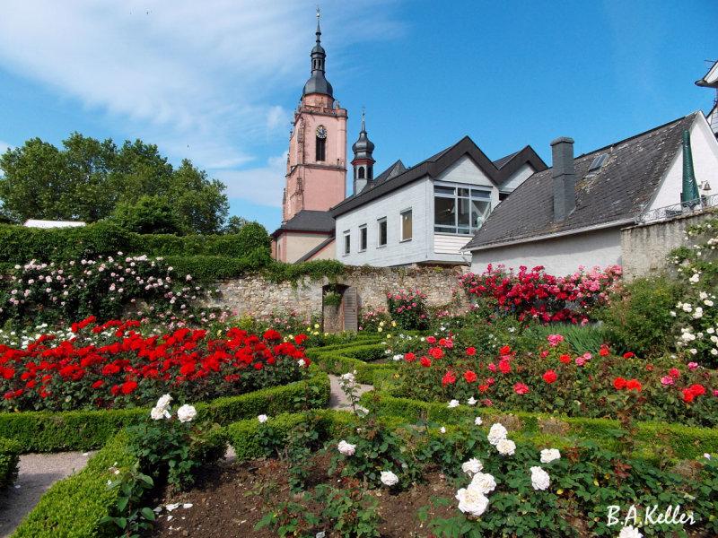 Rosengarten und Kirche St.Peter und Paul