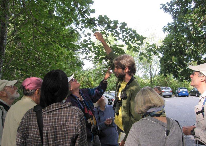Great Meadows Caterpillar Hike