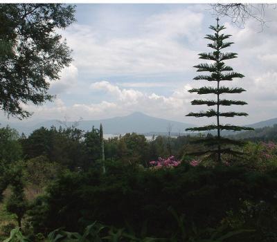 Gringo Hill