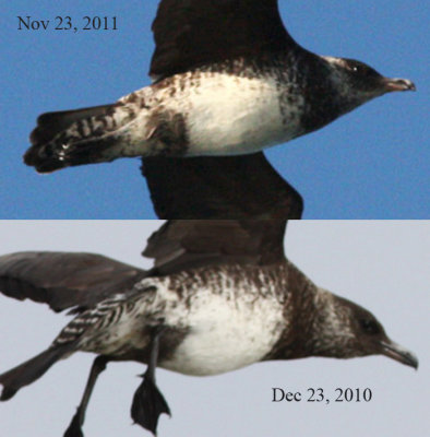 Comparison of 2010 and 2011 photographs