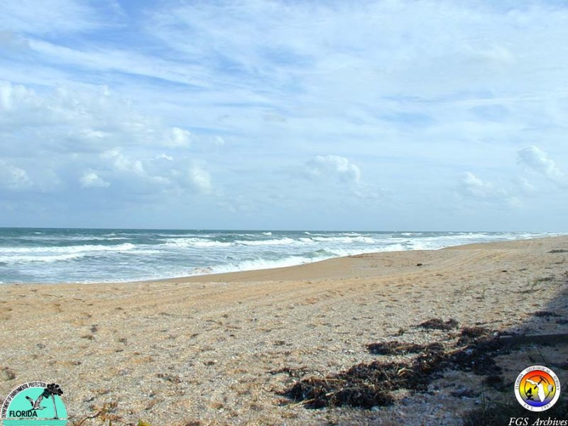 MMSNEFLStudy-BeachSJCo..JPG