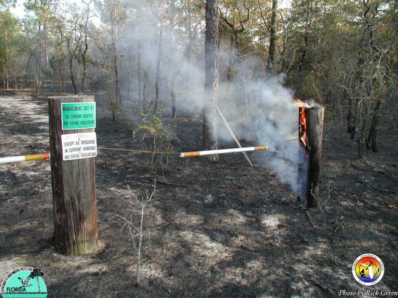 Controlled Burn- Eglin AFB.jpg