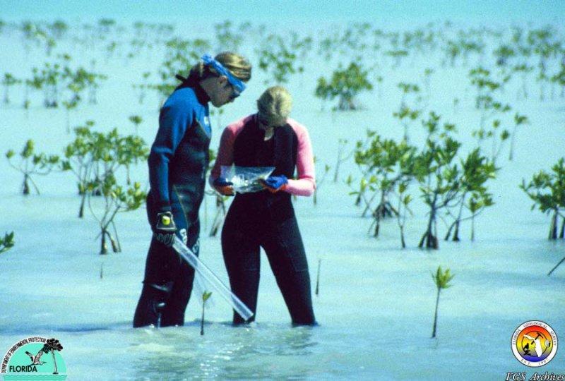 Florida Bay fauna sampling.jpg