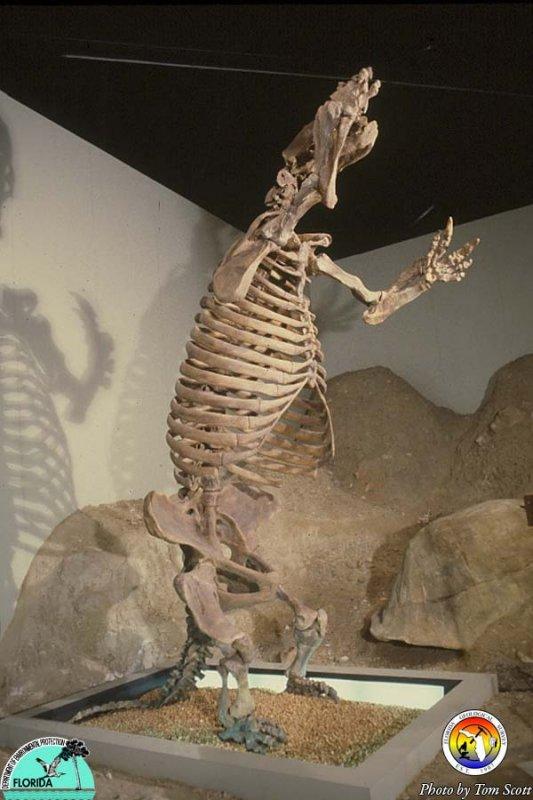 Giant Sloth.jpg