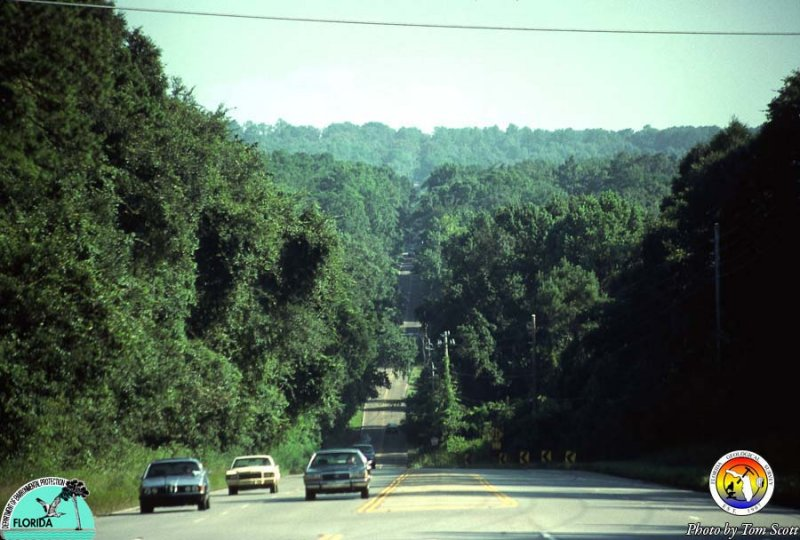 Tallahassee Hills.jpg