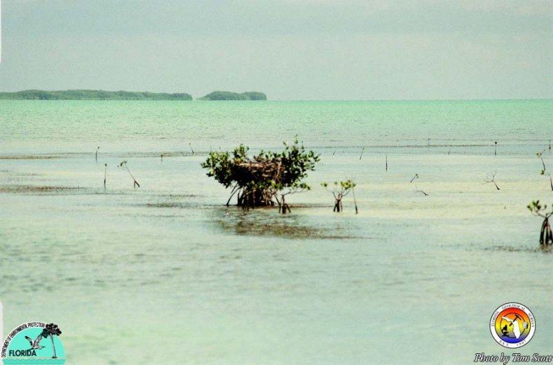 Ospery nesting Florida Bay4.jpg
