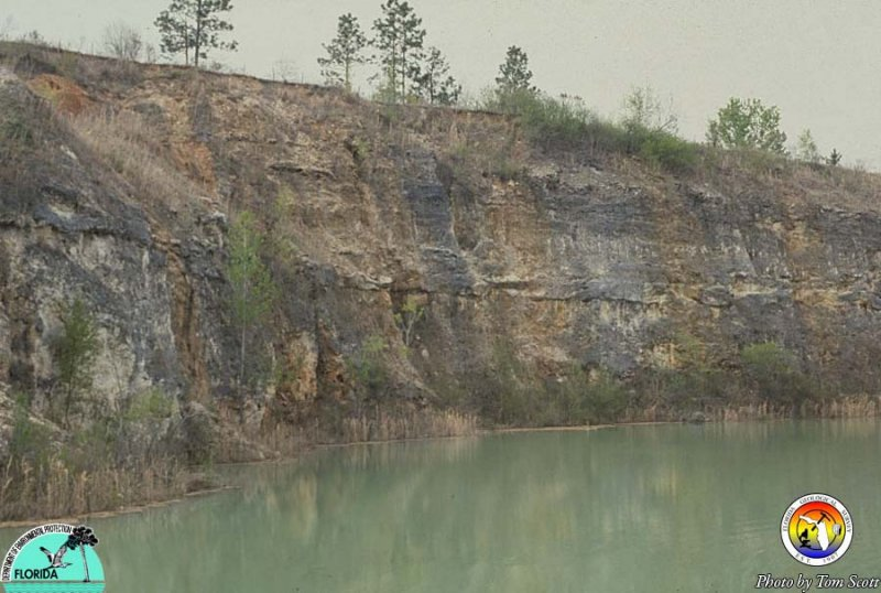 Bridgeboro-pit Oligocene.jpg