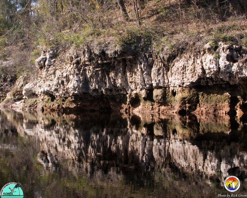 Suwannee Limestone Suwannee Rive.jpg