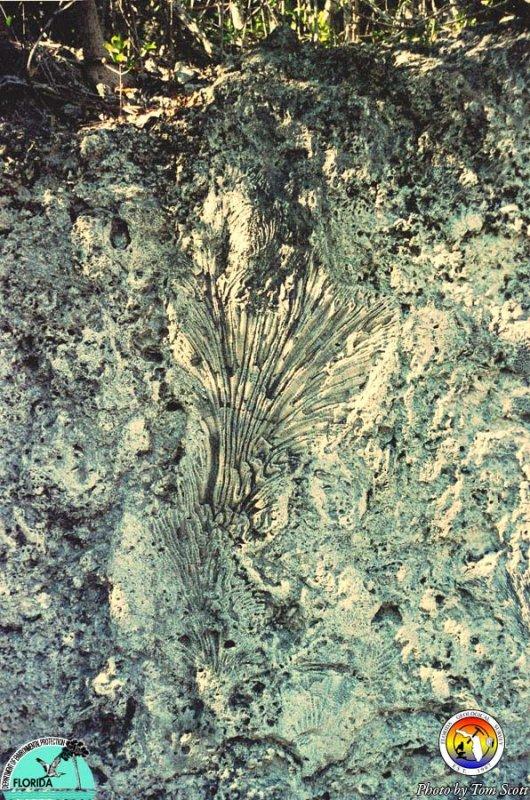 Key Largo Ls Windley Key State Park corals.jpg