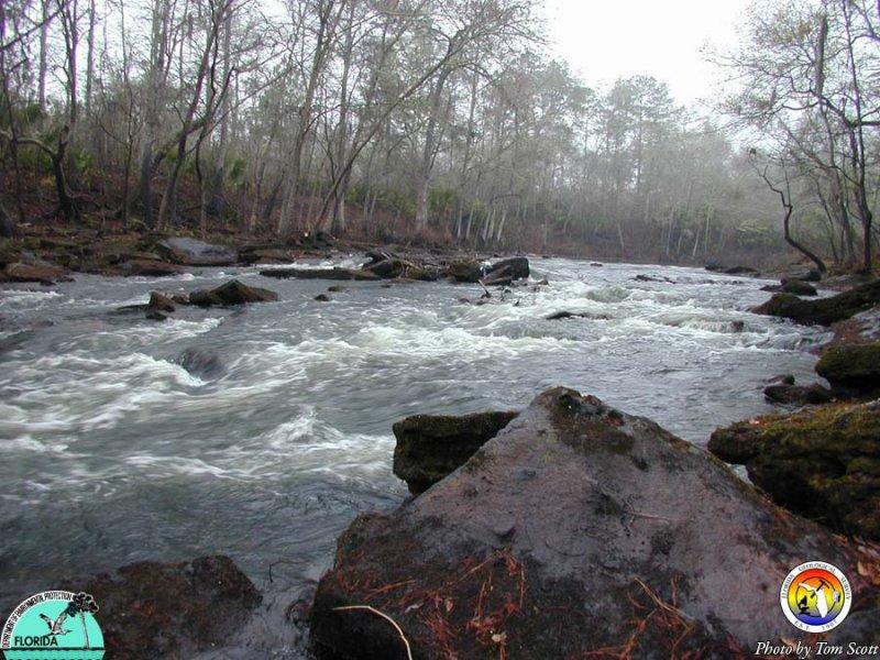 Aucilla River Rapids.JPG