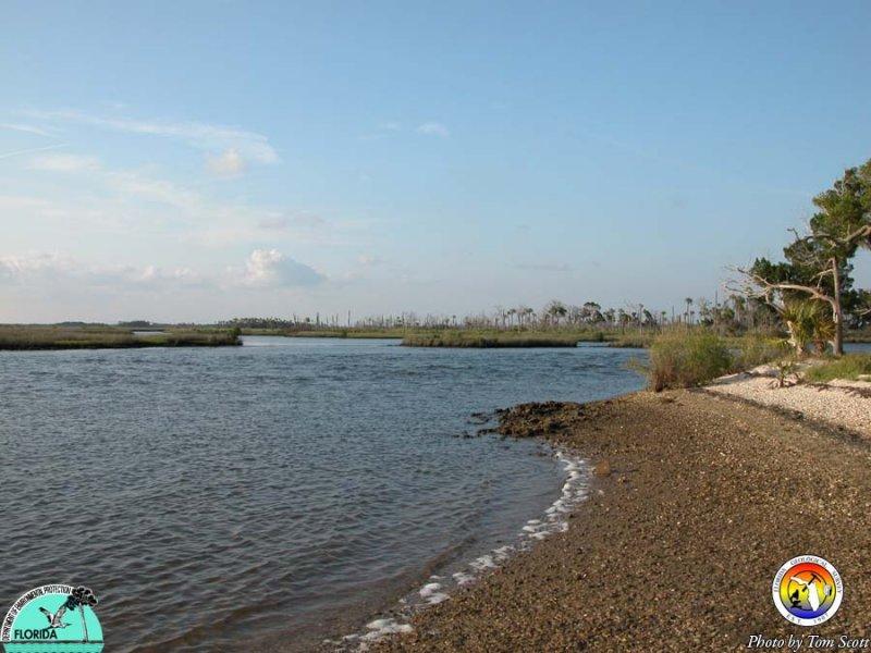 Homosassa River near Gulf.JPG
