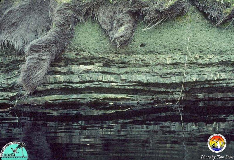 Outcrop 1981 Suwannee Rv B.jpg