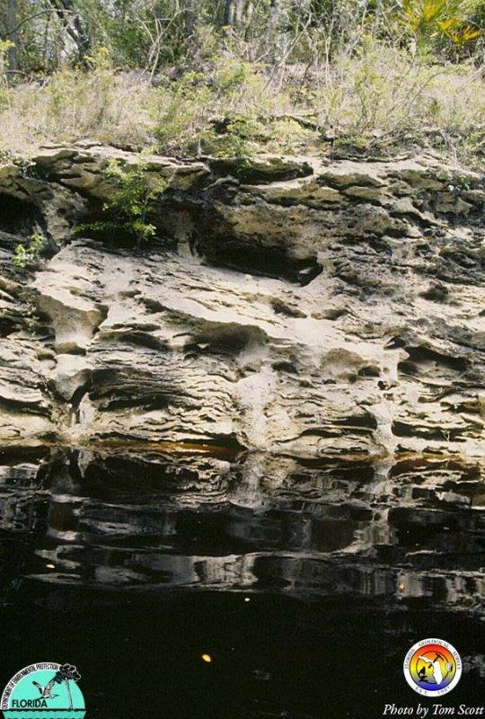 Suwannee Outcrop 2.jpg