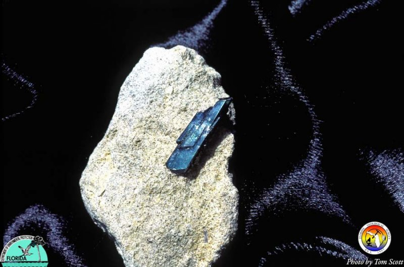 Vivianite Polk Co2.jpg