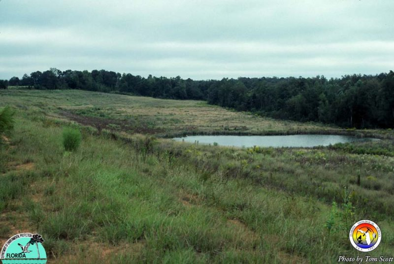 Reclaimed land Fullers earth mine Gadsden Co.jpg