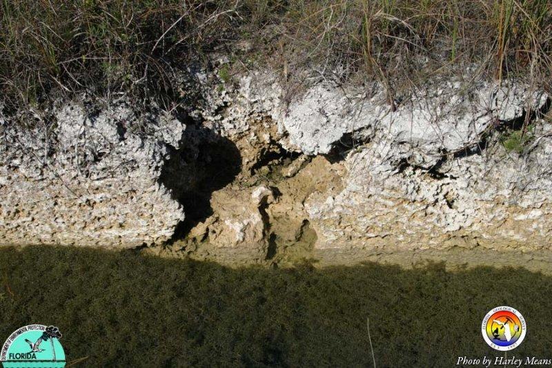 Everglades microkarst 2.jpg
