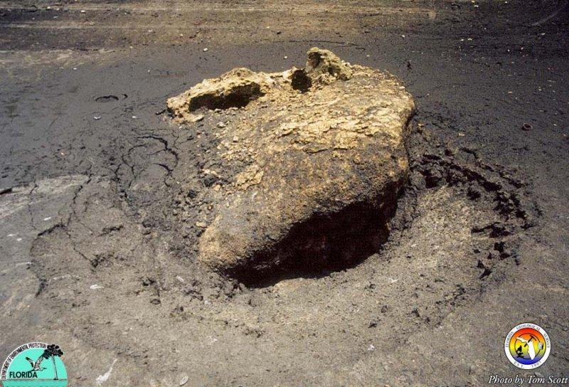 Lake Iamonia St Marks Fm boulder.jpg