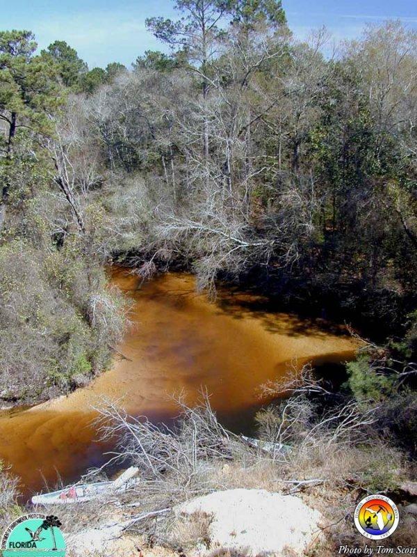 Shoal River.JPG