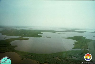 Everglades Florida Bay.jpg